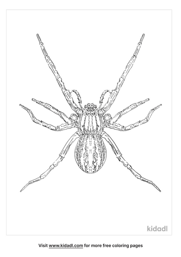 rabid-wolf-spider-coloring-page