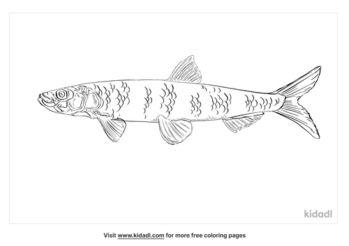 rainbow-smelt-coloring-page