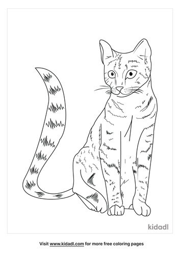 realistic-cat-coloring-page-1-lg.png