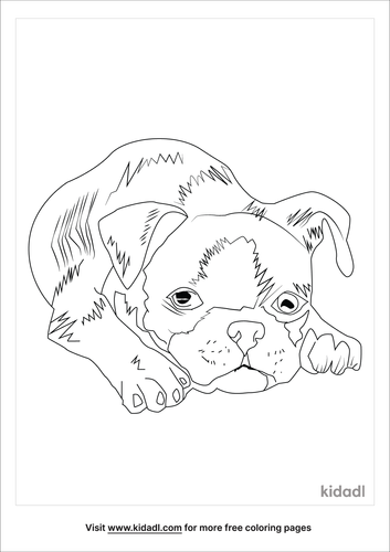 realistic-newborn-boston-terrier-coloring-page.png