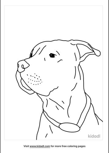realistic-pitbull-coloring-pages-lg.png