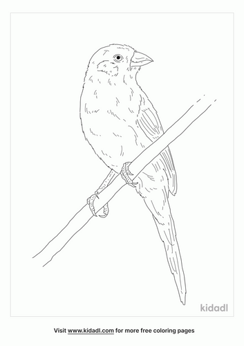 red-cheeked-cordon-bleu-coloring-page