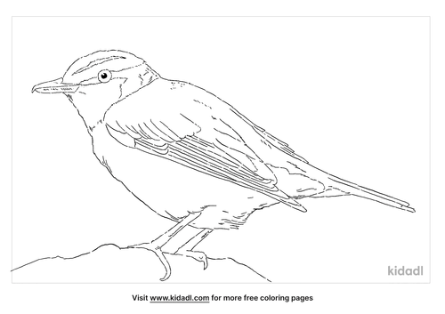 red-eyed-vireo-coloring-page