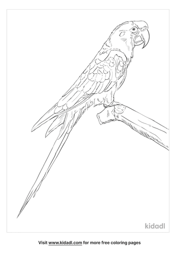 red-fronted-macaw-coloring-page