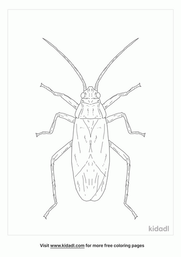 red-shouldered-bug-coloring-page