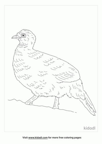 red-spurfowl-coloring-page