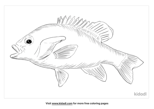 redbreast-sunfish-coloring-page