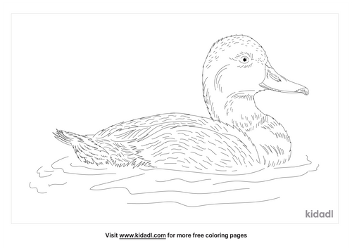 redhead-duck-coloring-page