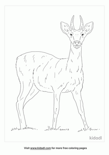 reedbuck-coloring-page