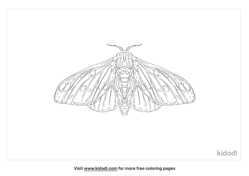regal-moth-coloring-page