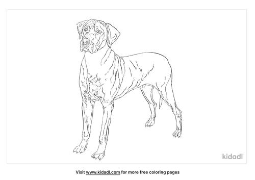 rhodesian-ridgeback-coloring-page