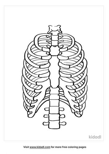 rib-cage-coloring-pages.png