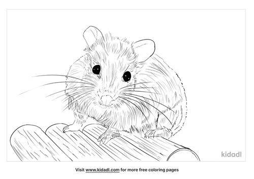 roborovski-hamsters-coloring-pages