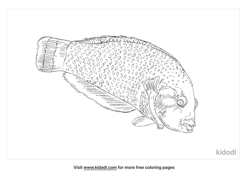 rockmover-wrasse-coloring-page
