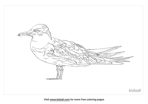 roseate-tern-coloring-page