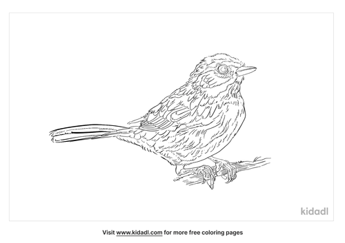 rufous-crowned-sparrow-coloring-page