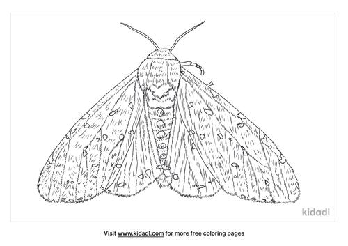 salt-marsh-moth-coloring-page