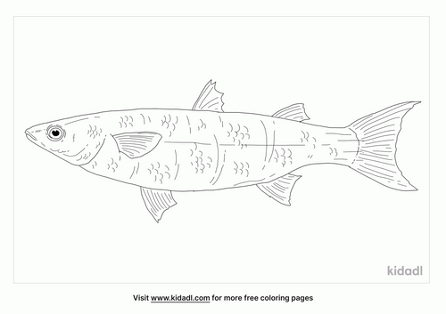 sand-mullet-coloring-page
