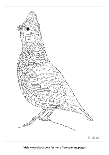 scaled-quail-coloring-page