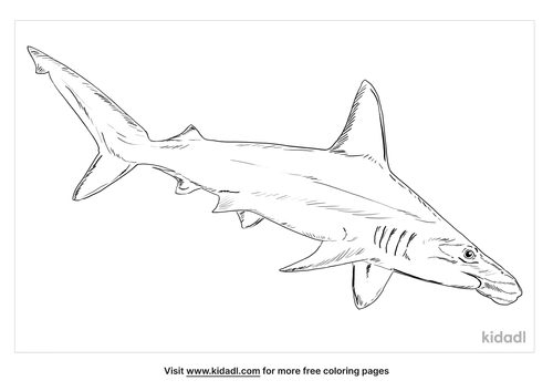 scalloped-hammerhead-coloring-page