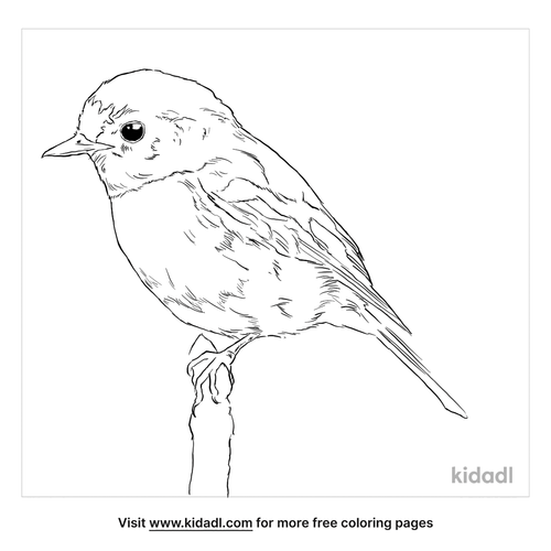 scarlet-robin-coloring-page