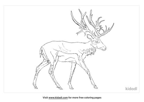 schomburgks-deer-coloring-page