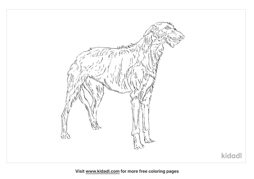 scottish-wolfhound-coloring-page
