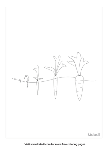 seed-to-carrot-coloring-page.png