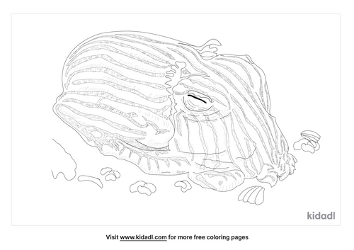sepiadariidae-coloring-page