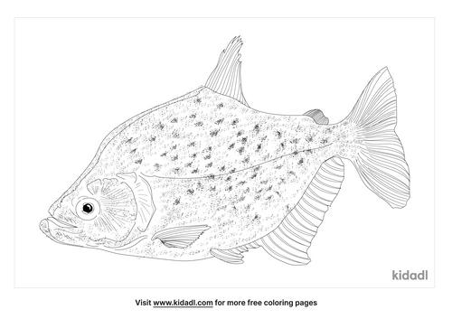 serrasalmus-geryi-coloring-page
