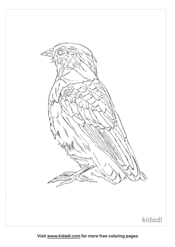 sharp-beaked-ground-finch-coloring-page