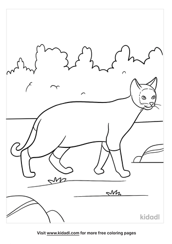 siamese cat coloring page-3-lg.png