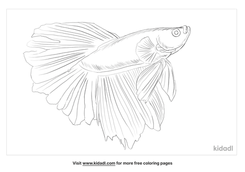 siamese-fighting-fish-coloring-page
