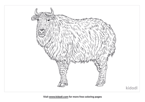 sichuan-takin-coloring-page