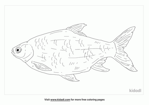 silver-barb-coloring-page