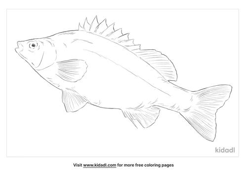 silver-perch-coloring-page