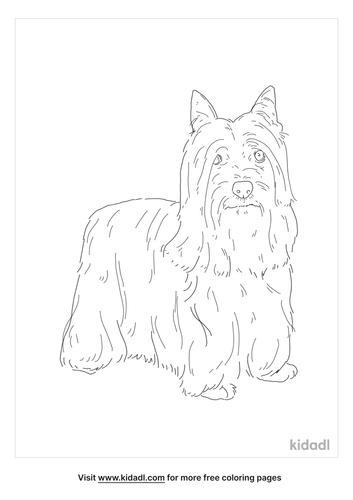 skye-terrier-coloring-page