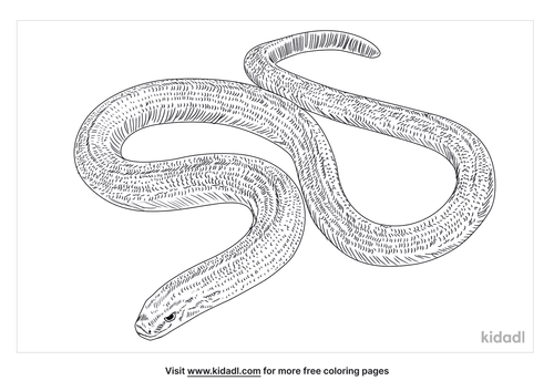 slow-worm-coloring-page