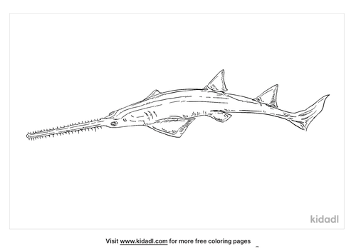 smalltooth-sawfish-coloring-page