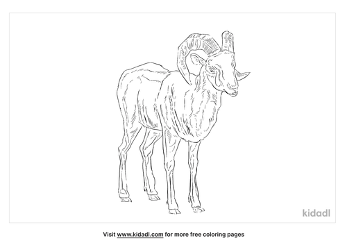 snow-sheep-coloring-page