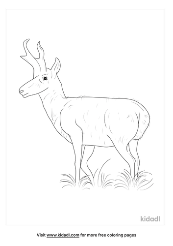 sonoran-pronghorn-animal-coloring-page
