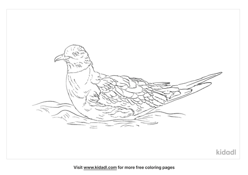 sooty-shearwater-coloring-page
