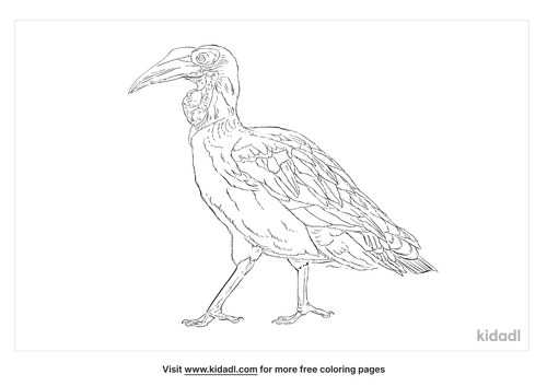 southern-ground-hornbill-coloring-page