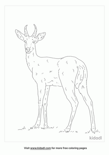 southern-reedbuck-coloring-page