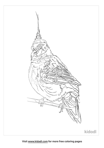 spinifex-pigeon-coloring-page