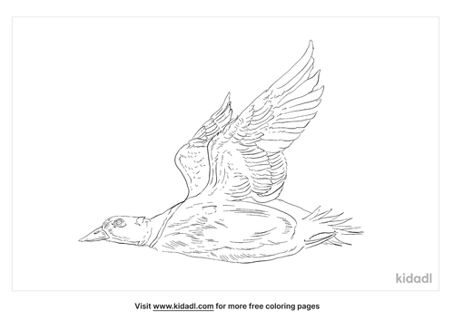 stellers-eider-coloring-page