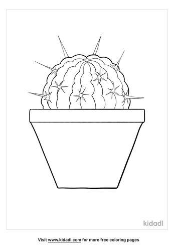 stenocactus multicostatus coloring page-lg.jpg