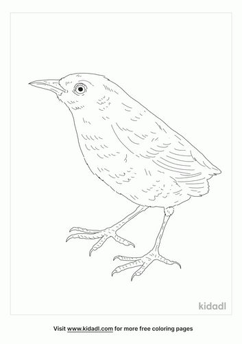 stephens-island-wren-coloring-page