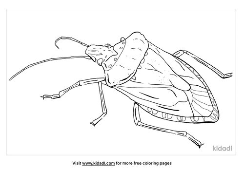 stink-bug-coloring-page
