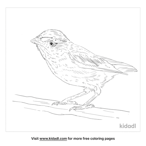 striated-pardalote-coloring-page